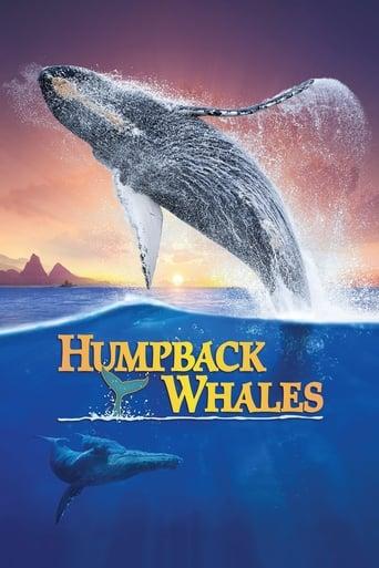 Assistir Humpback Whales online